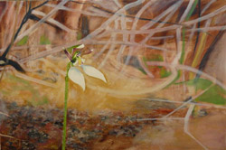 Parsons Band. Painting of a native orchid by local artist Hannelore (Winner of the Port Lincoln Bio Arts Prize 2010)